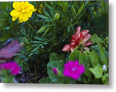 Metal Print featuring the photograph The Bud by Robert Culver