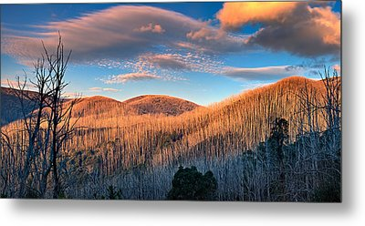 The Burnt Forest Metal Print by Mark Lucey