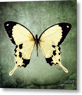 The Butterfly Project 1 Metal Print by Diane Miller
