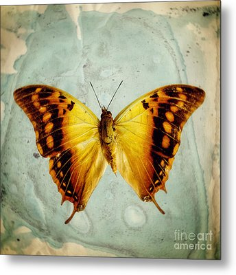 The Butterfly Project 6 Metal Print by Diane Miller