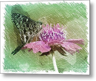 The Butterfly Visitor Metal Print by Carol Groenen