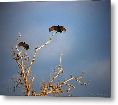 The Buzzard Roost Metal Print by Joyce Dickens