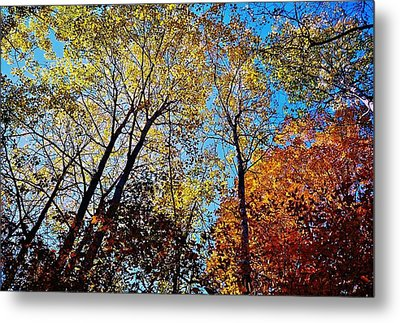The Canopy Metal Print by Daniel Thompson