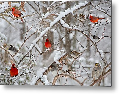 The Cardinal Rules Metal Print by Betsy Knapp