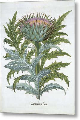 The Cardoon, From The Hortus Metal Print