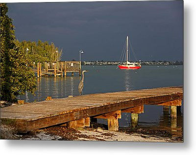The Casual Observer Metal Print by HH Photography of Florida