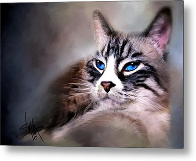 The Cat Metal Print by Robert Smith