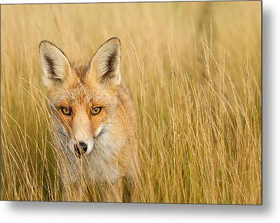 The Catcher In The Grass Metal Print by Roeselien Raimond