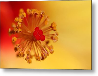 The Center Of The Hibiscus Flower Metal Print by Debbie Oppermann
