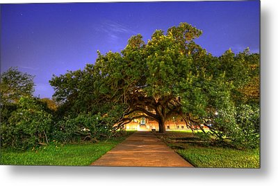 The Century Tree Metal Print