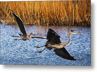 The Chase - # 22 Metal Print by Paulette Thomas