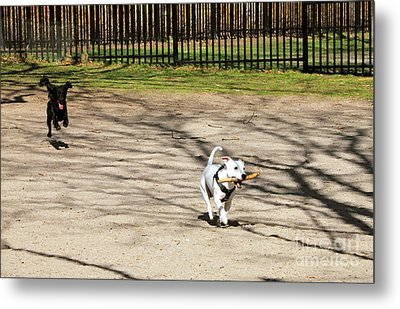 The Chase Metal Print by Charline Xia