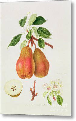 The Chaumontelle Pear Metal Print by William Hooker