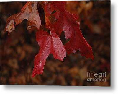 The Color Of Fall Metal Print by Art Hill Studios