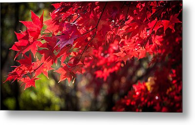 The Color Of Fall Metal Print by Patrice Zinck