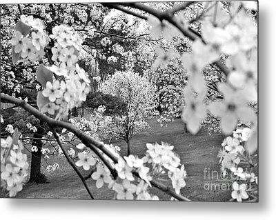 The Color Of Spring Metal Print by Jay Nodianos
