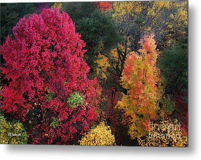 The Colors Of Fall Metal Print by E B Schmidt