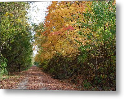 Metal Print featuring the photograph The Colors Of Fall by Ramona Whiteaker