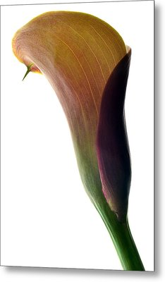 The Colours Of Calla. Metal Print by Terence Davis