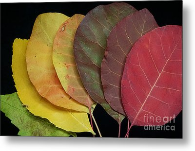 The Colours Of Nature Metal Print by Stela Taneva