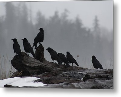 The Corvidae Family  Metal Print by Cathie Douglas