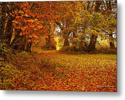 The Covered Path Metal Print
