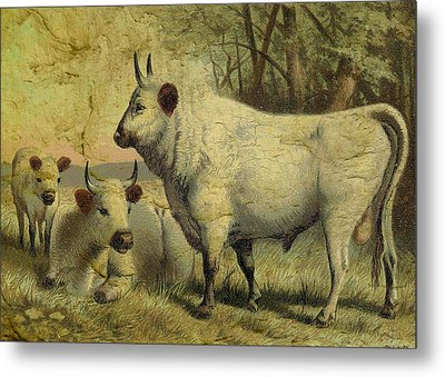The Cows Came Home Metal Print by Sarah Vernon