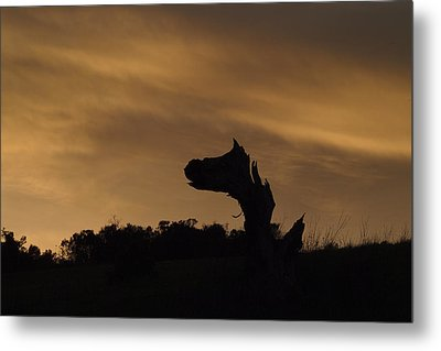 Metal Print featuring the photograph The Creature by Priya Ghose