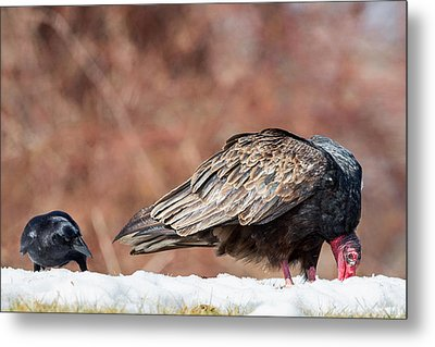 The Crow And Vulture Metal Print by Bill Wakeley