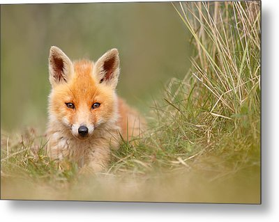 The Cute Kit Metal Print by Roeselien Raimond