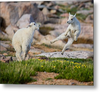 Metal Print featuring the photograph The Dance Of Joy by Jim Garrison