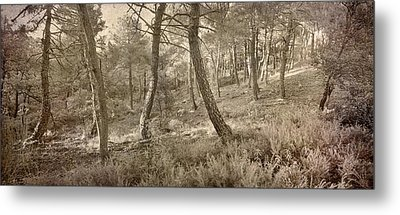 The Dance Of The Forest Metal Print by Guido Montanes Castillo