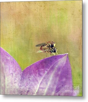 The Dance Of The Hoverfly Metal Print