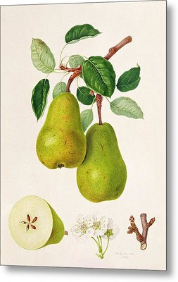 The D'auch Pear Metal Print