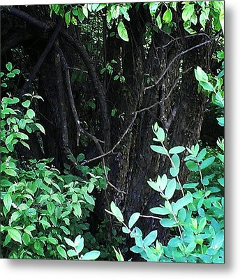 Metal Print featuring the photograph The Deep Dark Woods by Thomasina Durkay
