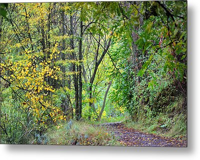 The Dense Forest Metal Print by Guido Montanes Castillo
