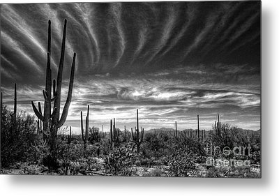 The Desert In Black And White Metal Print