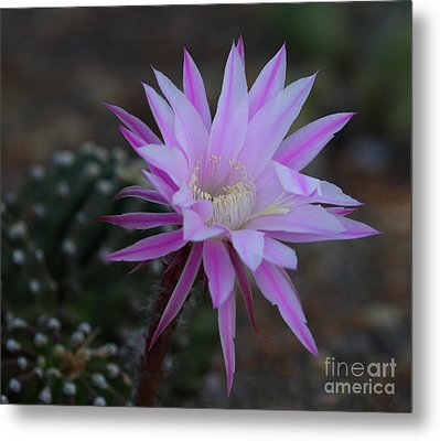 The Desert Whispers Hello Metal Print by Ruth Jolly