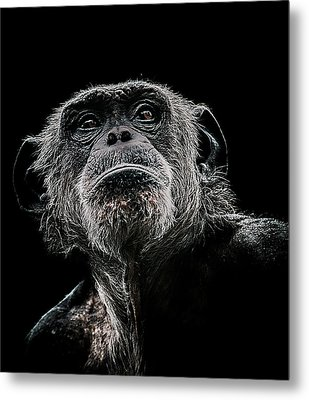 The Dictator Metal Print by Paul Neville