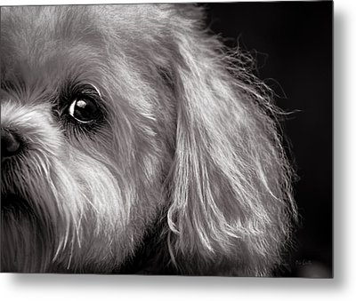 The Dog Next Door Metal Print
