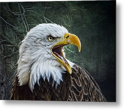 Metal Print featuring the photograph The Eagle's Cry by Brian Tarr