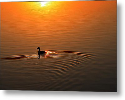 Metal Print featuring the photograph The Early Bird by Richard Stephen