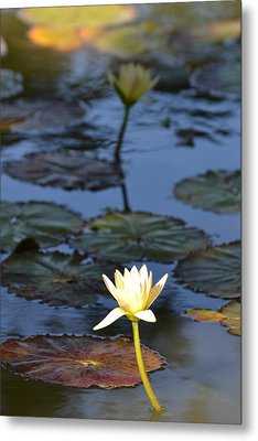 The Echo Of A Lotus Flower Metal Print