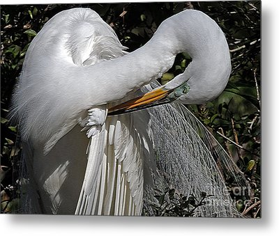 The Elegant Egret Metal Print