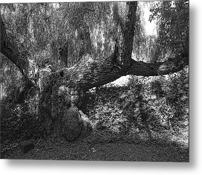 The Elephant Tree Metal Print