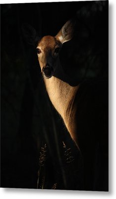 The Empress  Metal Print by Rita Kay Adams