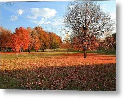Metal Print featuring the photograph The End Of Autumn In Francis Park by Scott Rackers