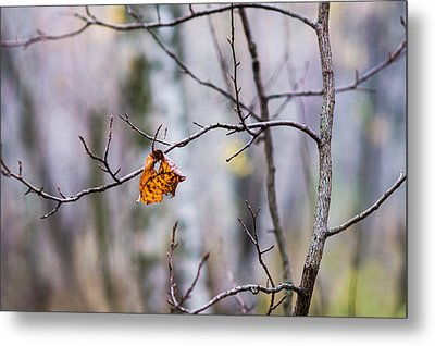 The Essence Of Autumn - Featured 3 Metal Print by Alexander Senin