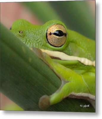 The Eye Has It Squared Metal Print by TK Goforth