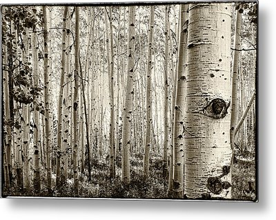 The Eye Of The Aspen Metal Print by John McArthur